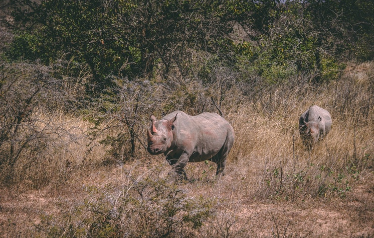 Rhinos on our Trek